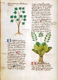 Fig. 4: Matthaeus Platearius, c. 1500.