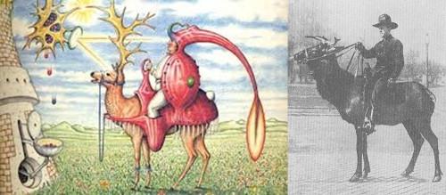 Fig. 9-10: Domesticated Elk