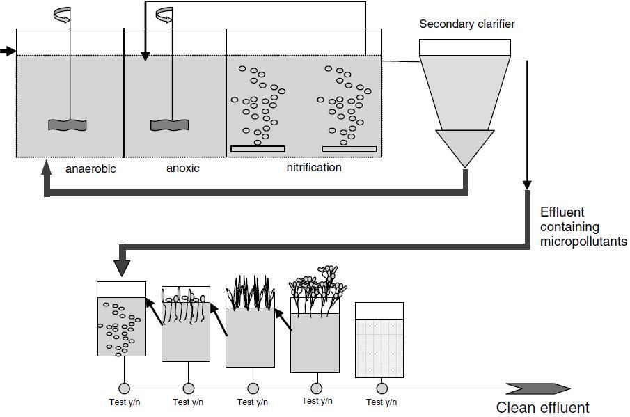 Figure 3. Phytoremediation reactor design, Source: Schröder et al. (2007)