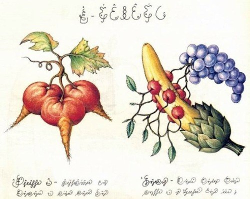 Image: Detail from Codex Seraphinianus